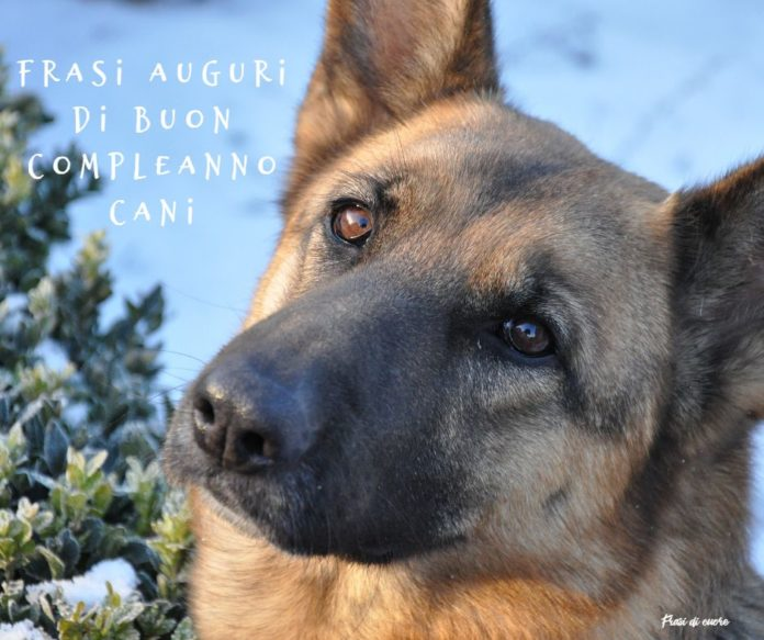 Frasi auguri di buon compleanno cani