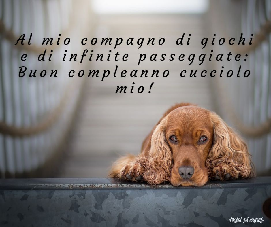 Frasi compleanno cani