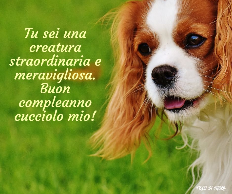 Compleanno cani