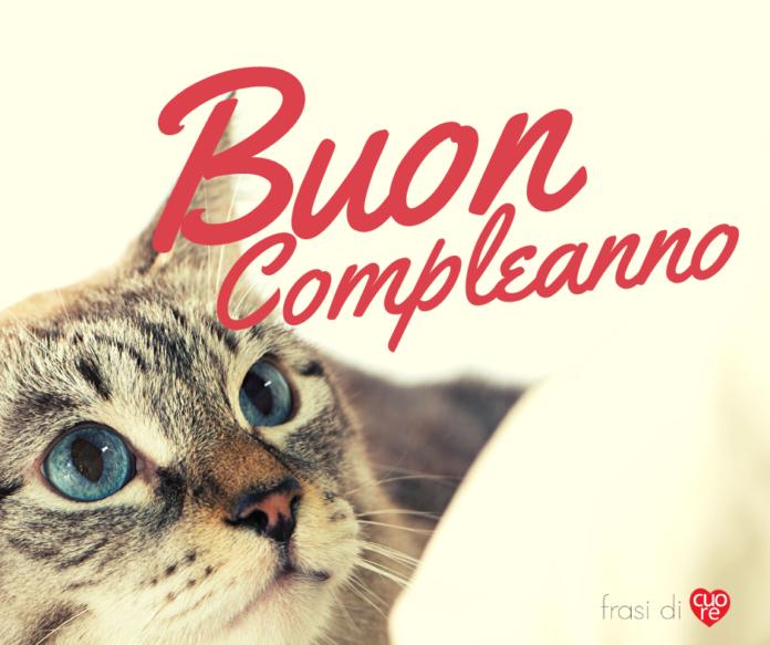 Buon compleanno gatto